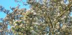 Řez stromů dle pěstebního tvaru