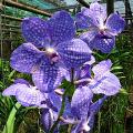 Hnojení orchidejí