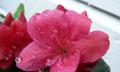 Kvetoucí keře